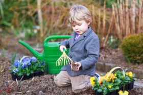 Toddler boy of 2 gardening and planting vegetable plants and flowers in garden, outdoors
